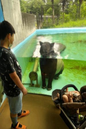 多摩動物公園のマレーバク